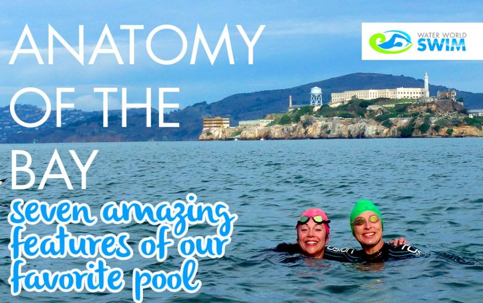 anatomyblog